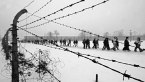 Auschwitz: The Forgotten Evidence